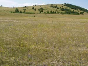 steppe1.jpg
